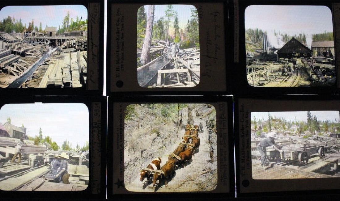 15 Lantern Slides - California Lumber Industry