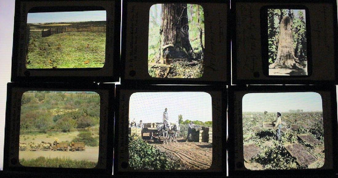 17 Lantern Slides - California Crops Industry
