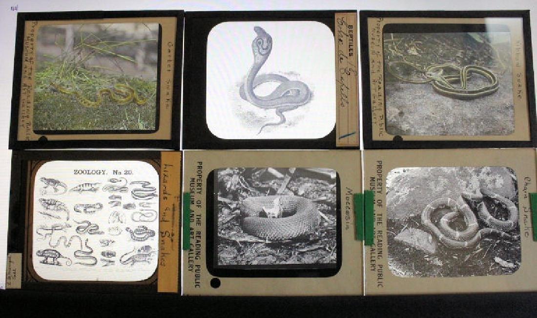 10 Lantern Slides - Snakes