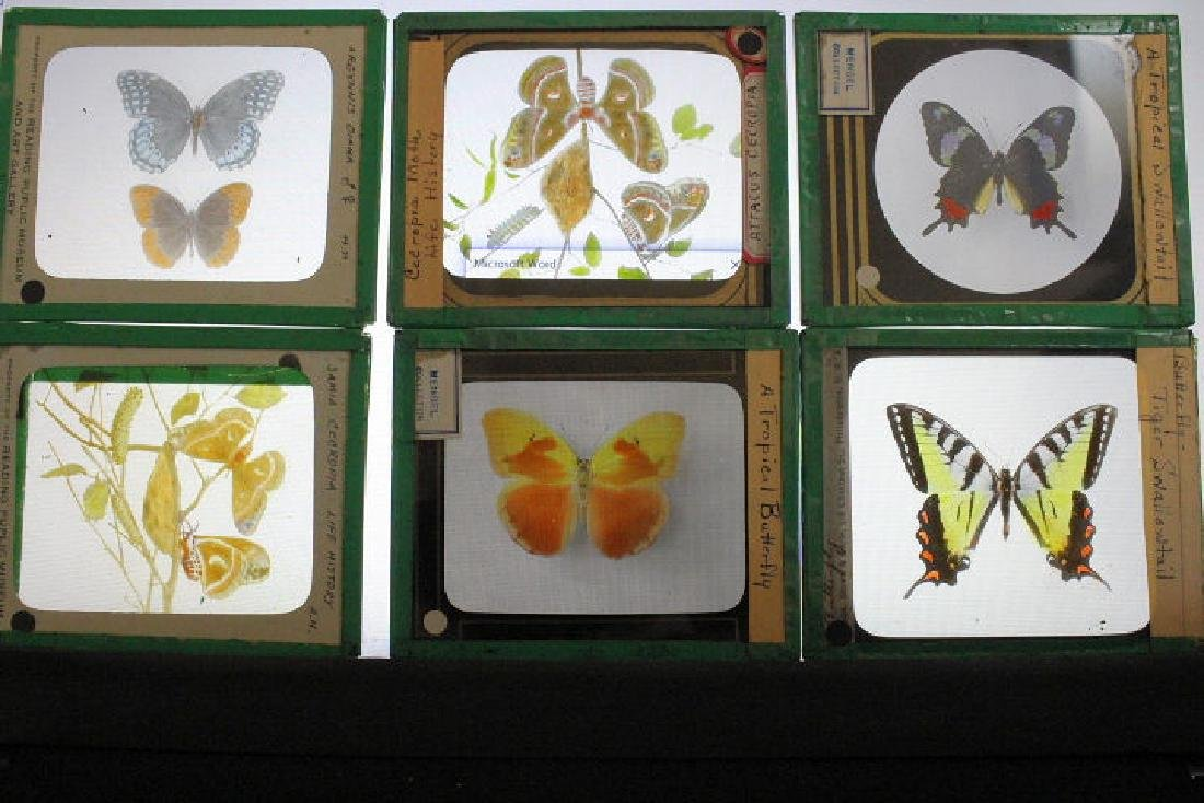 19 Lantern Slides - Butterflies & Moths