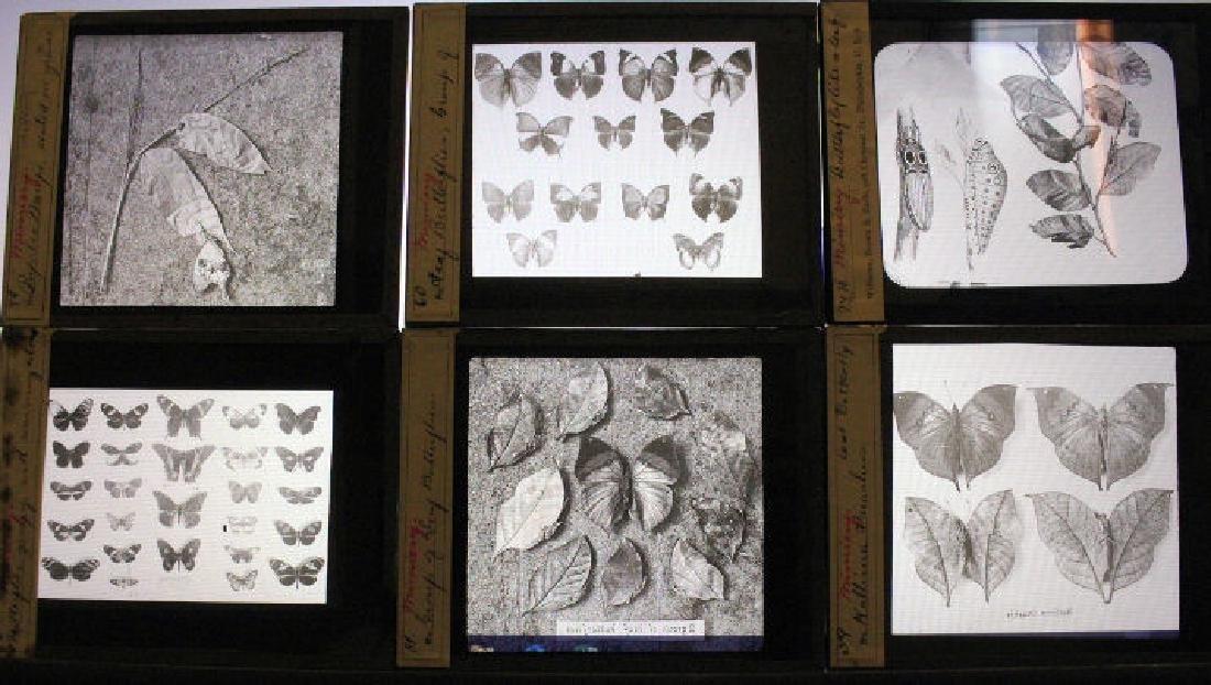 18 Lantern Slides - Butterflies & Moths
