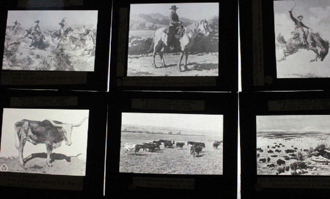 26 Lantern Slides - Boxed Series Story of Cattle