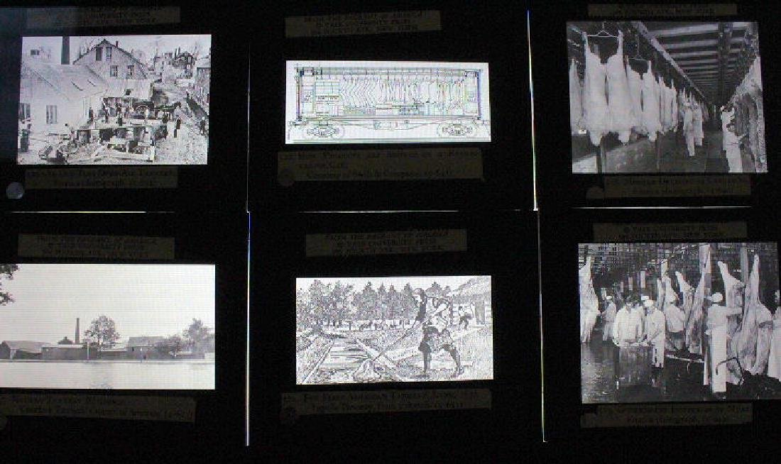 26 Lantern Slides - Boxed Series Story of Cattle - 3