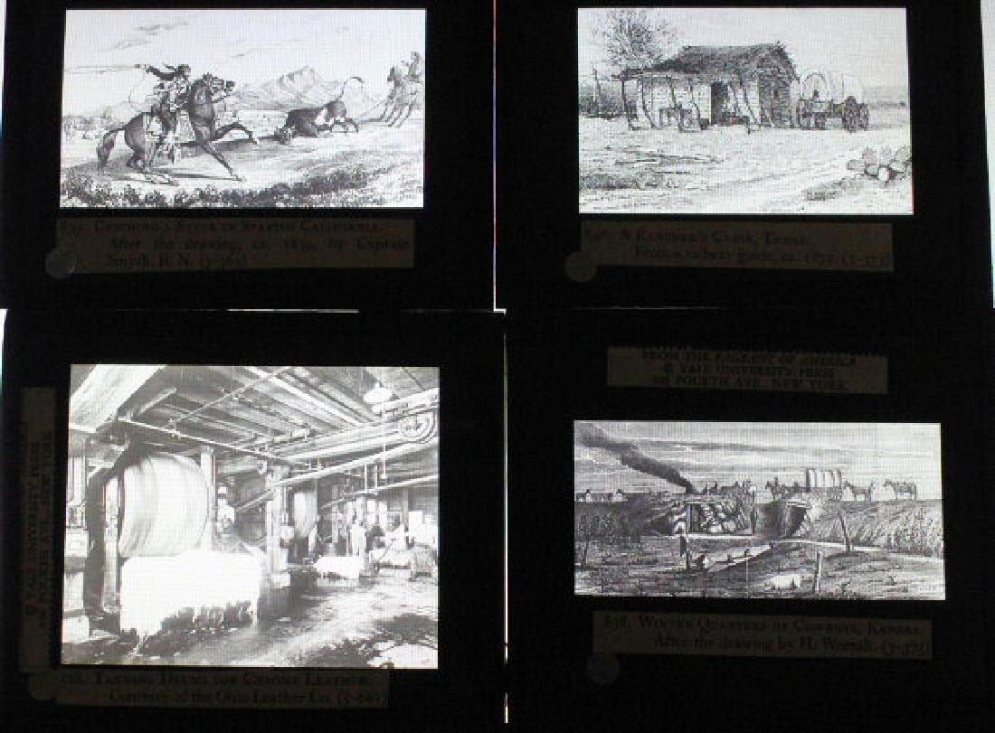 26 Lantern Slides - Boxed Series Story of Cattle - 5