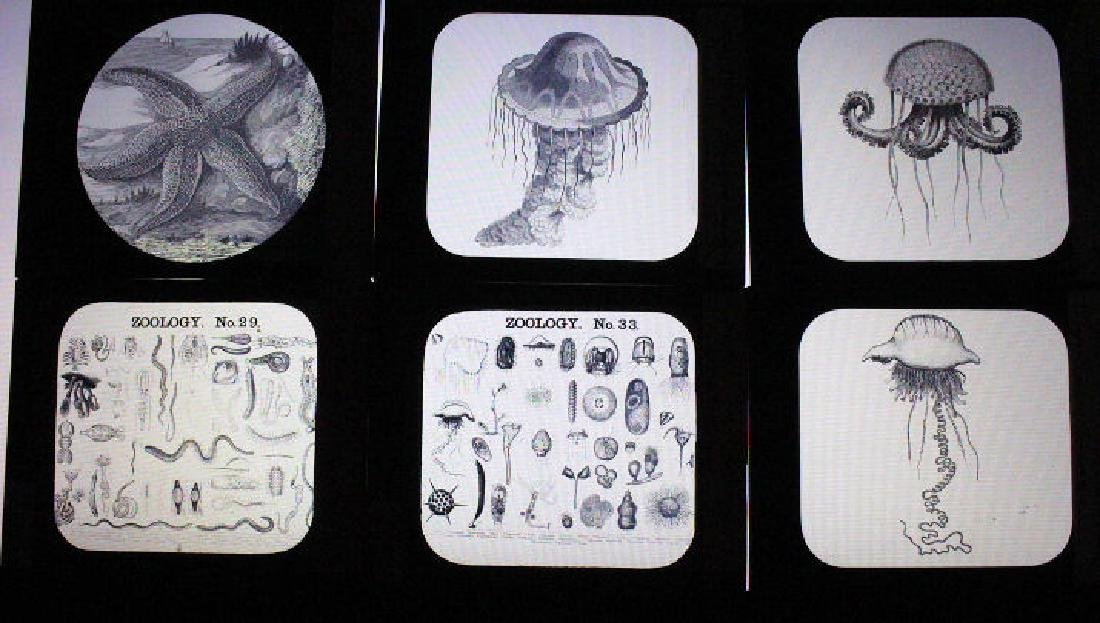 11 Lantern Slides - Zooology Mengel Collection
