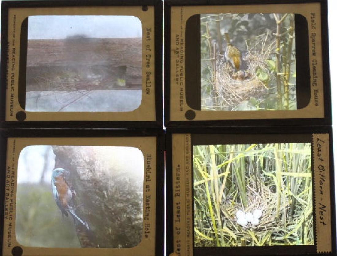 31 Lantern Slides - Birds and Their Nests