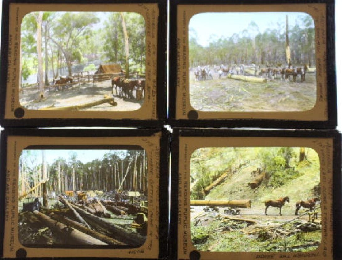 14 Lantern Slides - Australia Logging Industry