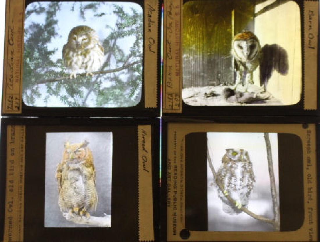 12 Lantern Slides - Owls