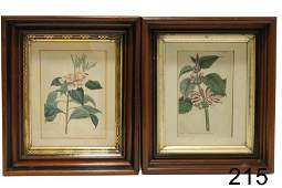 Pair Framed Botanical Prints Late 18  Early 19th C