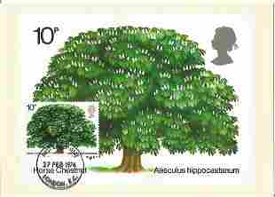 PHQ Card Number 5 Used, Horse Chestnut with Stamp and