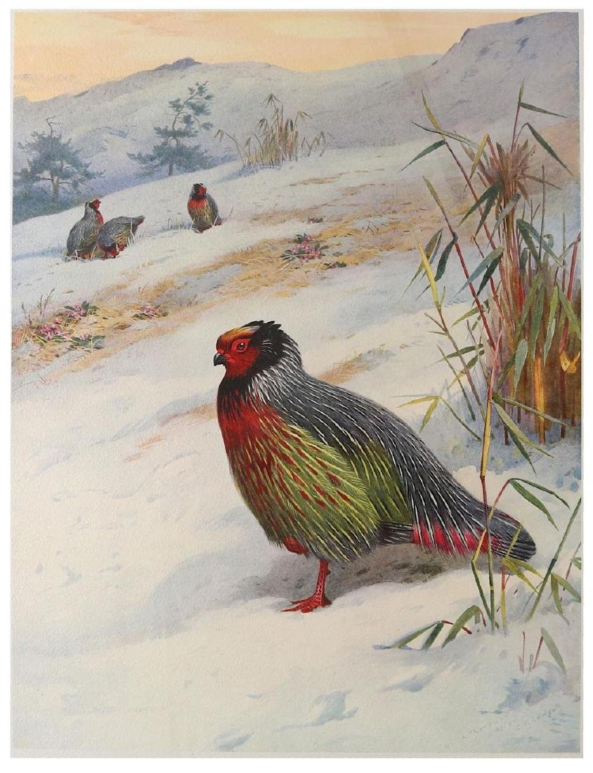 Beebe (William) A Monograph of the Pheasants, 4 vol., - 2