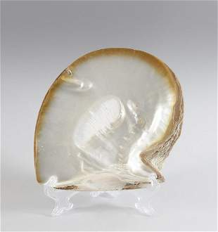 Naturalia  A shell France, 19th century.