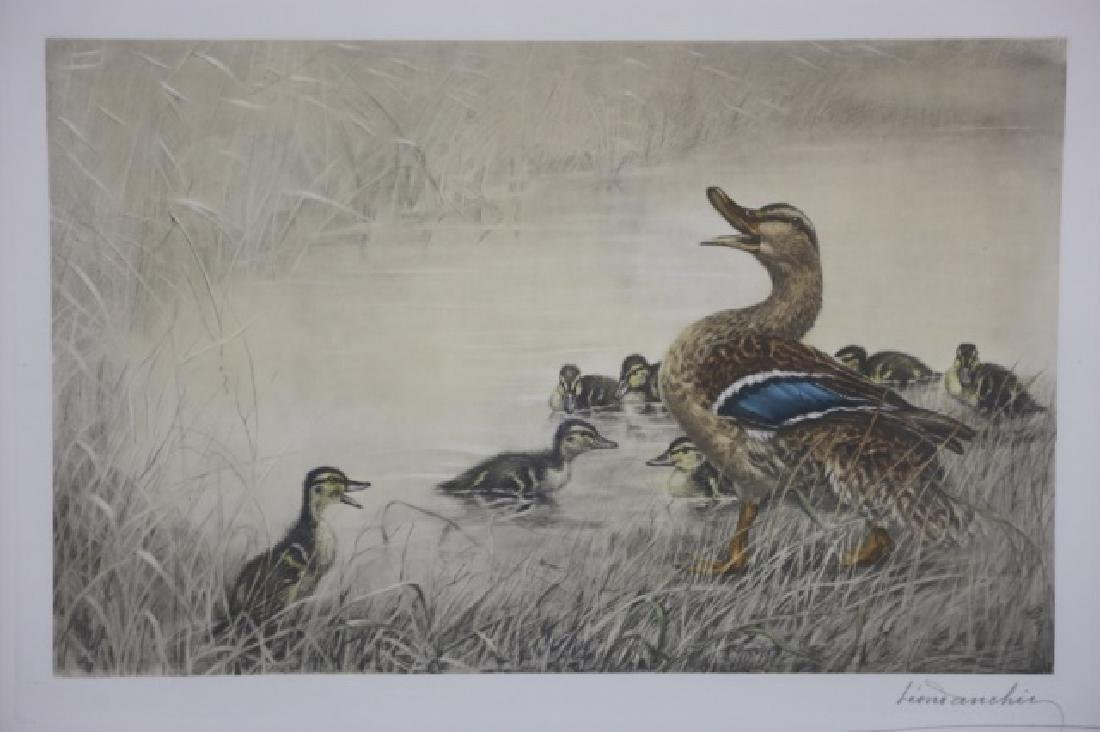 LEOND ANCHIZ DARCHIN (FRENCH) DUCKS - 3