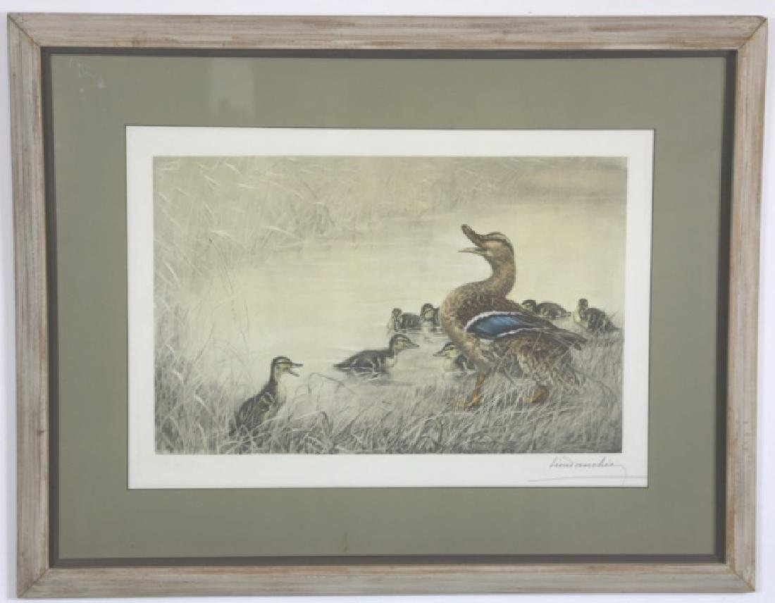 LEOND ANCHIZ DARCHIN (FRENCH) DUCKS - 6