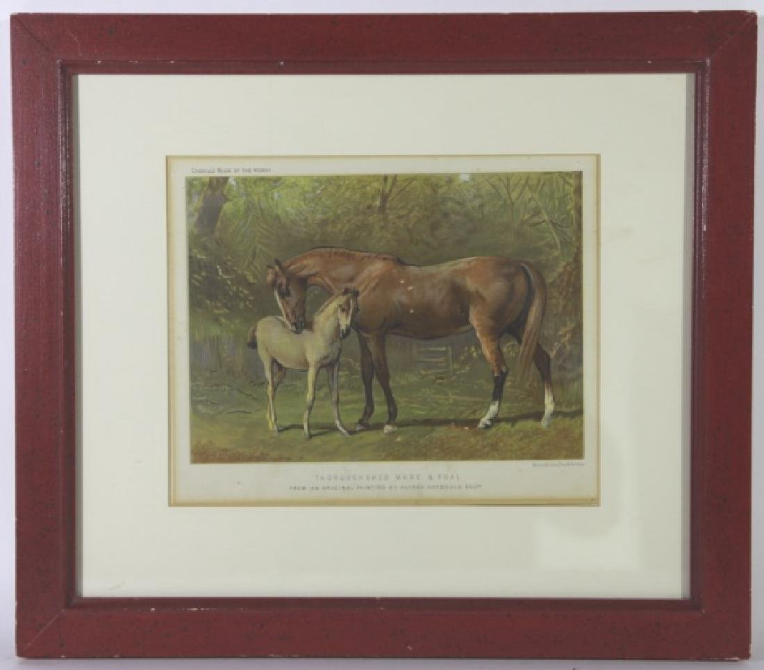 ALFRED CORBOULD  ESQUESTRIAN COLORED ENGRAVING