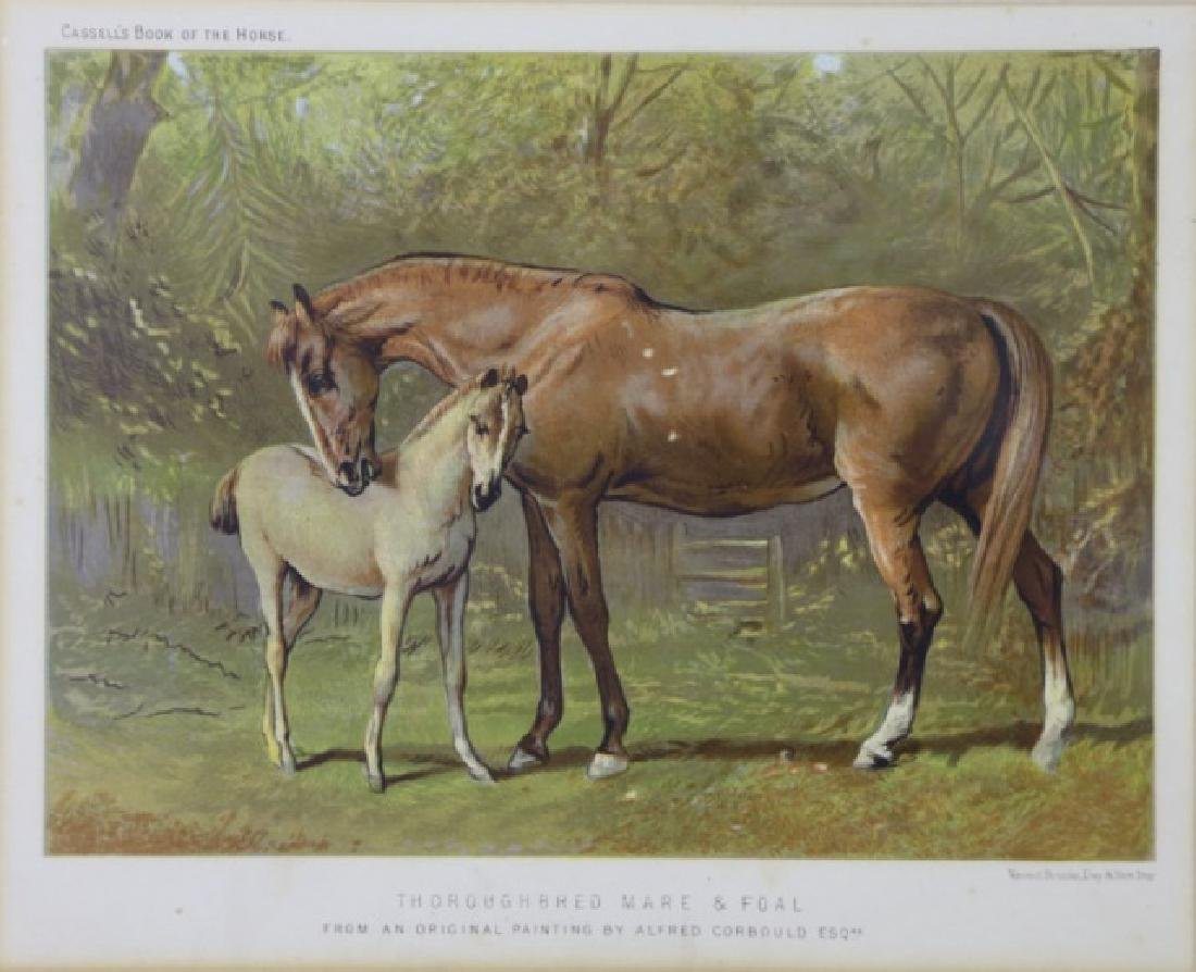 ALFRED CORBOULD  ESQUESTRIAN COLORED ENGRAVING - 2