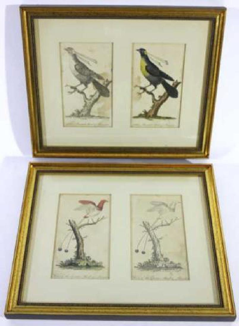 FRAMED HAND COLORED BIRDS OF PREY FRAMED WORKS