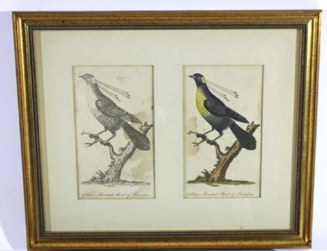 FRAMED HAND COLORED BIRDS OF PREY FRAMED WORKS - 2