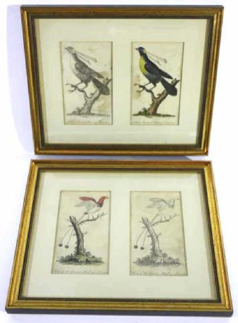 FRAMED HAND COLORED BIRDS OF PREY FRAMED WORKS - 4