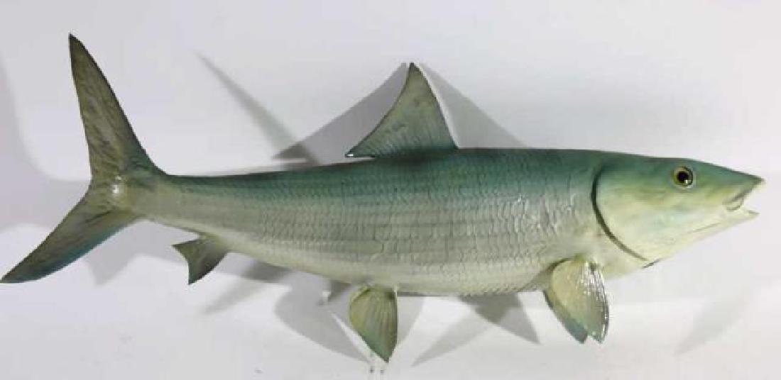 ANTIQUE STRIPER FISH MOUNT - 3