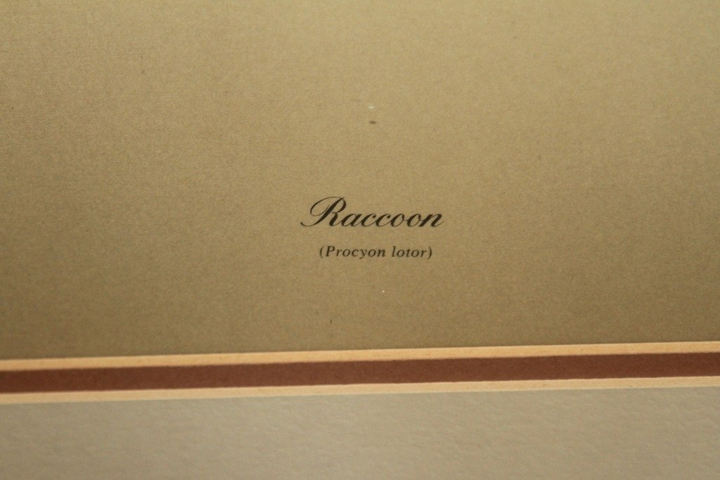 "CHARLES FRACE ""RACCOON"" PROCYON LOTOR: - 3"