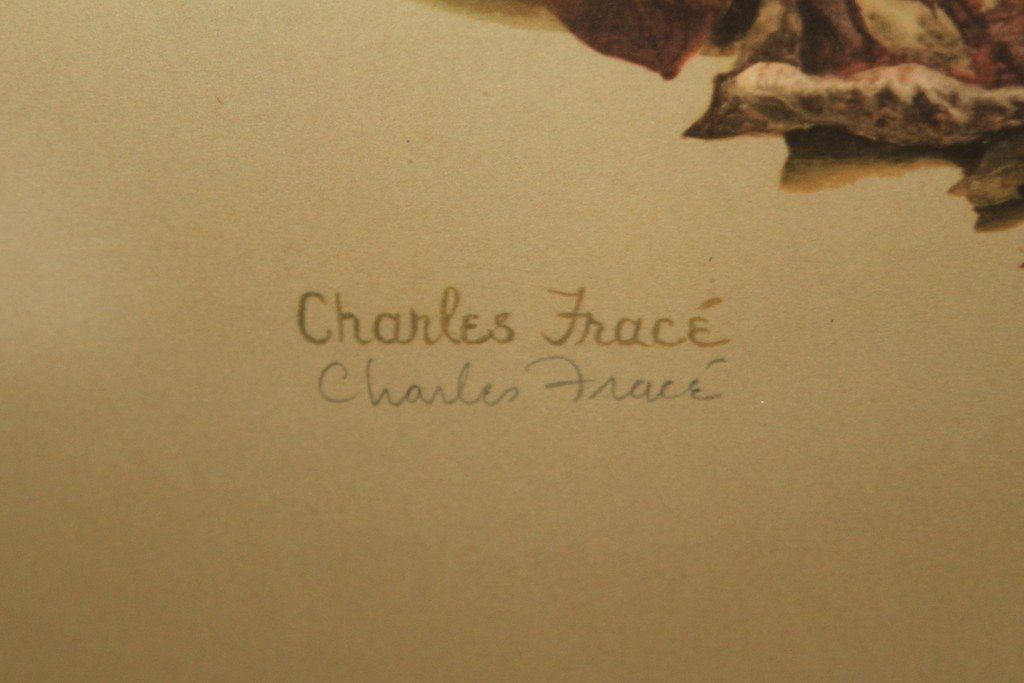 "CHARLES FRACE ""RACCOON"" PROCYON LOTOR: - 4"