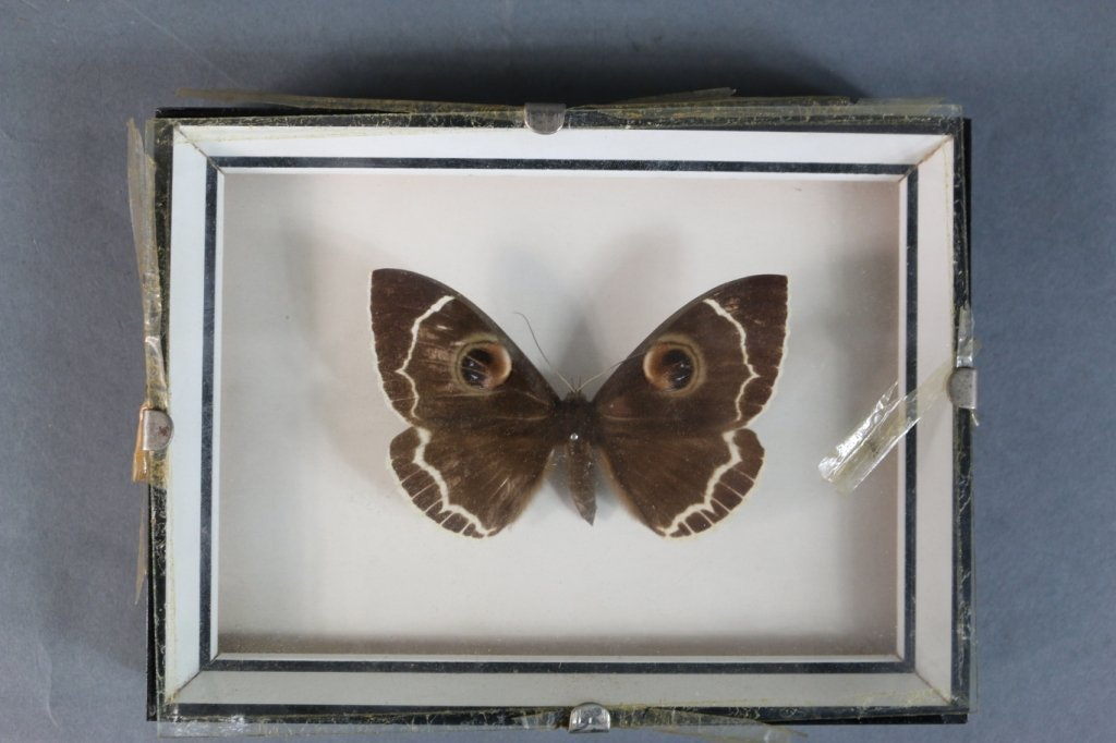 VINTAGE SHADOW BOX BUTTERFLY