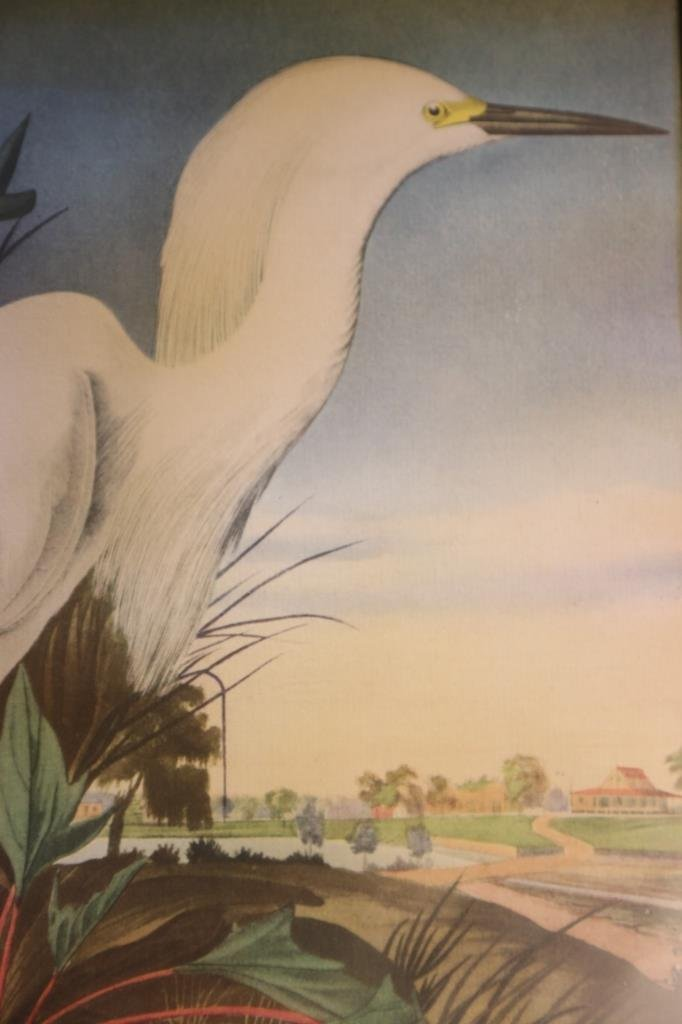 ANTIQUE SNOWY HERON FROM RICE PLANTATION SC - 4