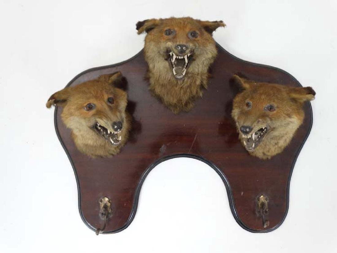 Taxidermy : An Edwardian mahogany wall plaque with