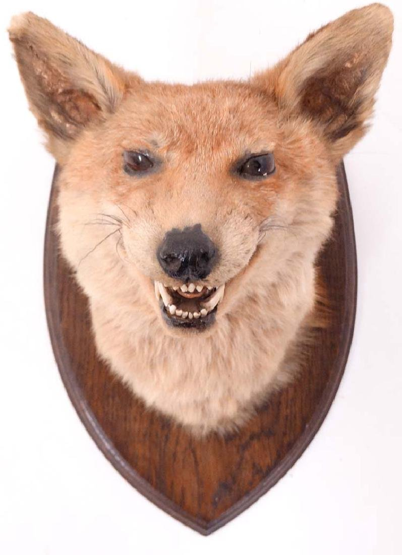 Taxidermy : A Fox mask , affixed to an oak shield , the - 3