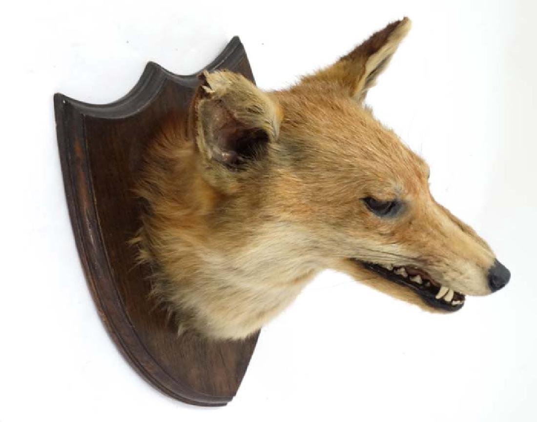 Taxidermy : A Fox mask , affixed to an oak shield , the - 4