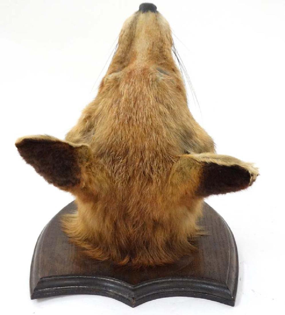 Taxidermy : A Fox mask , affixed to an oak shield , the - 5