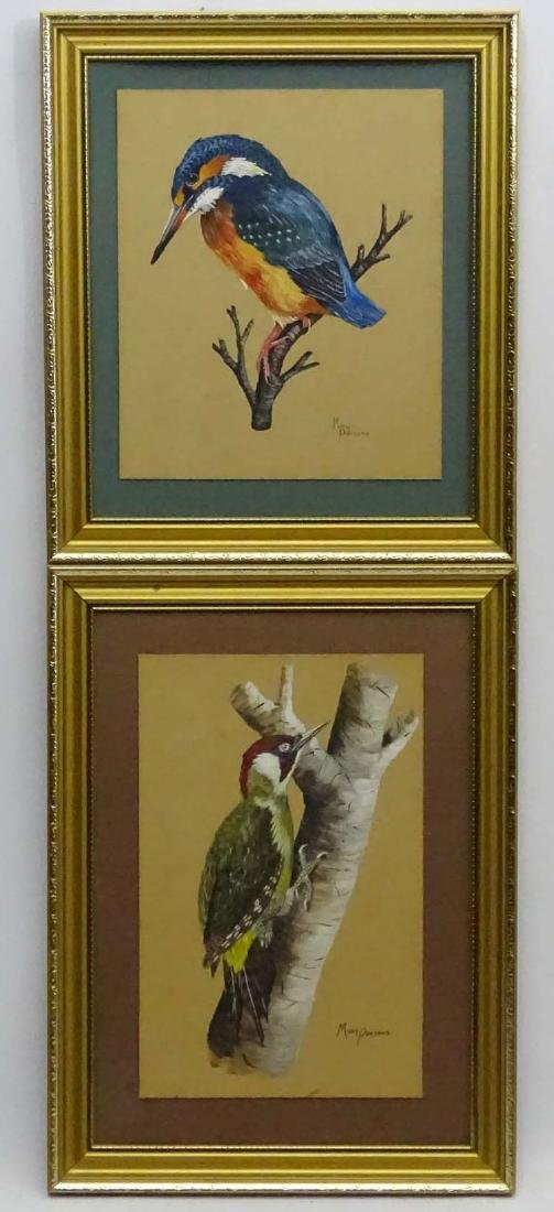 Mary Parsons XIX-XX Avian Portraits, Gouache and