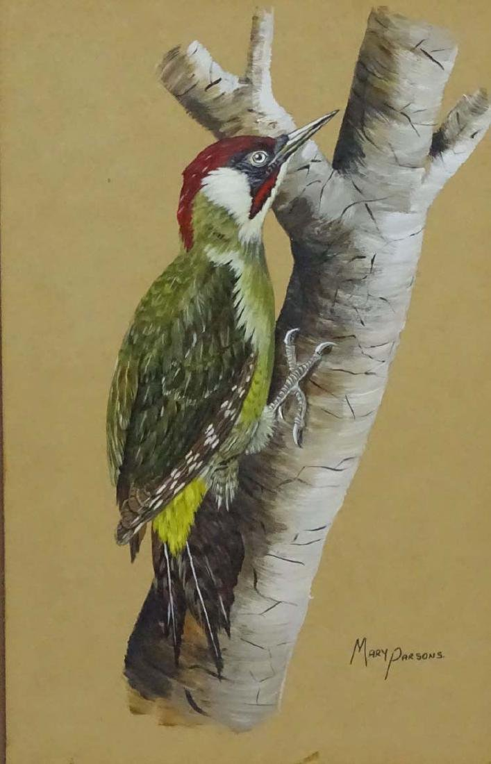 Mary Parsons XIX-XX Avian Portraits, Gouache and - 3