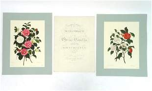 A large folio, Monograph on the Genus Camellia, by