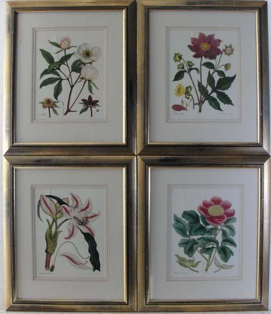 21: Botanical Prints after publisher H Andrews c. 1804