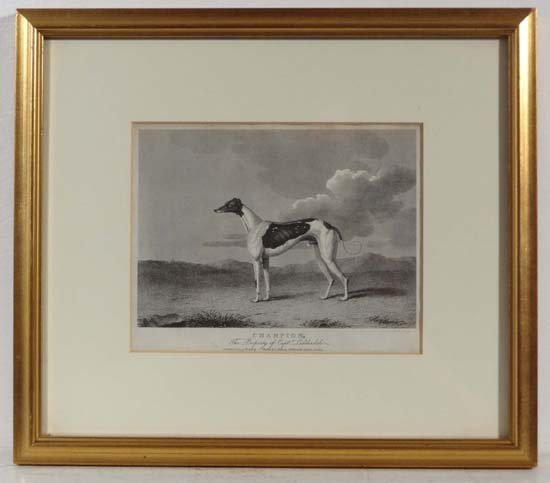 Coursing : Scott monochrome engraving ' Champion , the