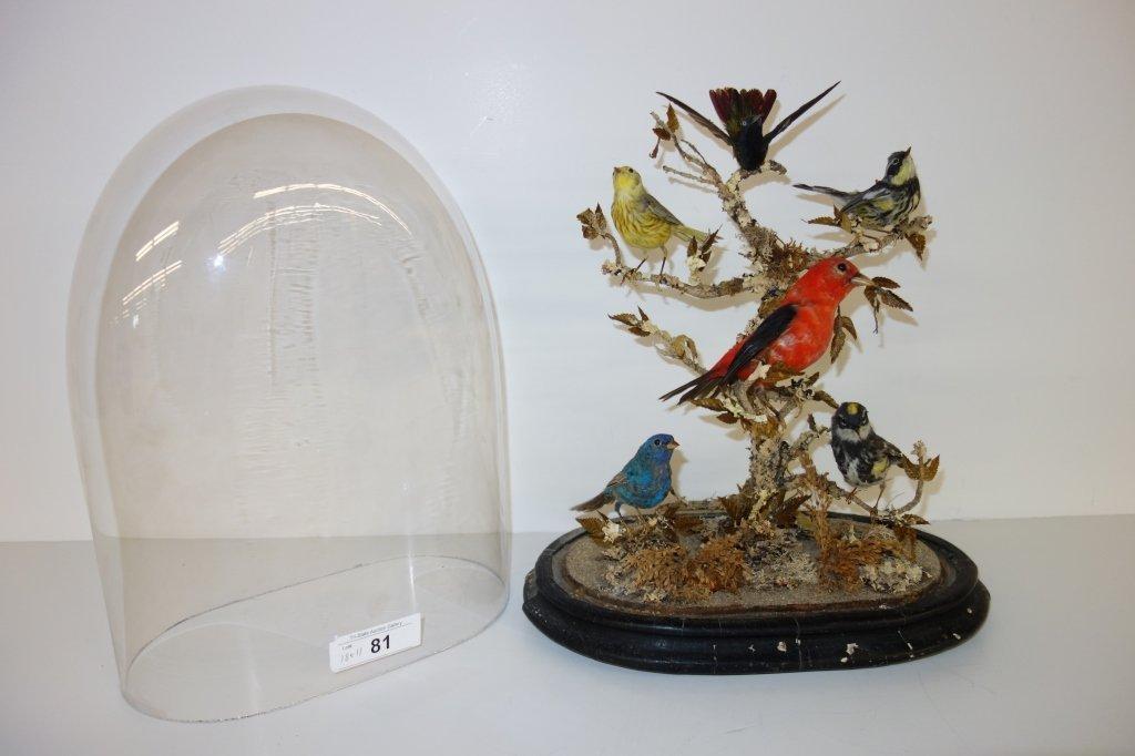 Victorian  6 bird taxidermy in glass dome