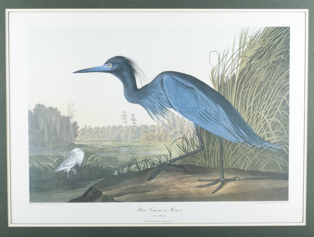 "Print of Havell's ""A Blue Crane or Heron"""