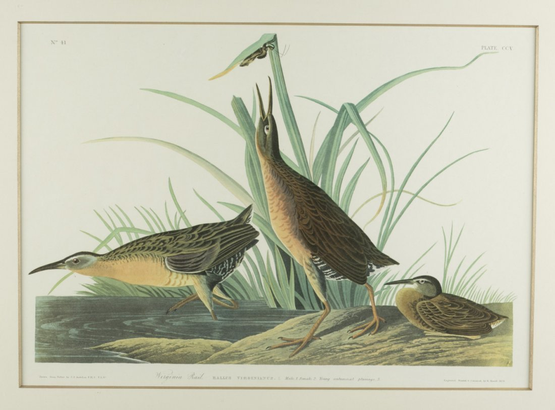"Two (2) Framed Bird Engravings- ""Virginia Rail"" &"