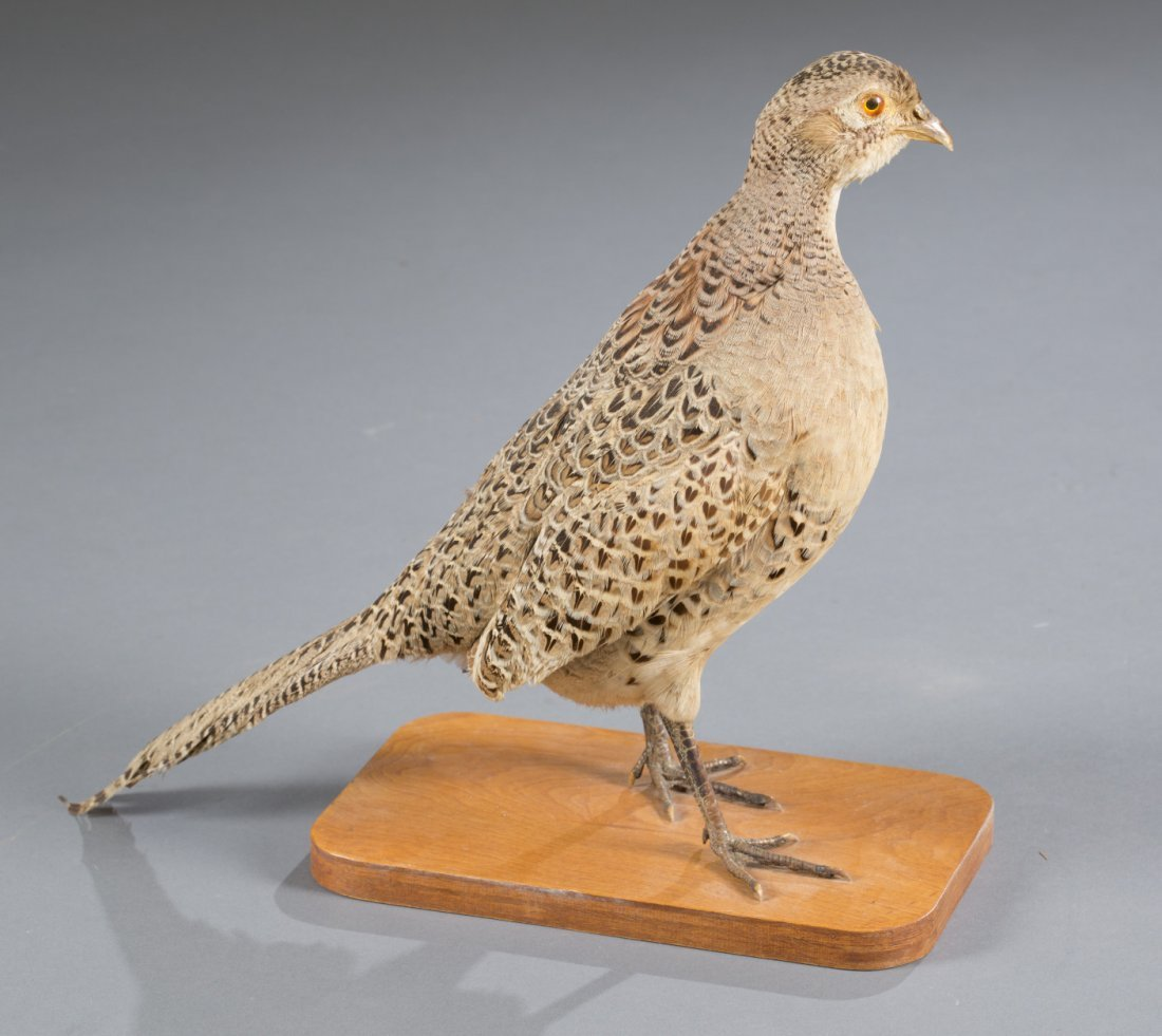 Grouse Taxidermy Mount