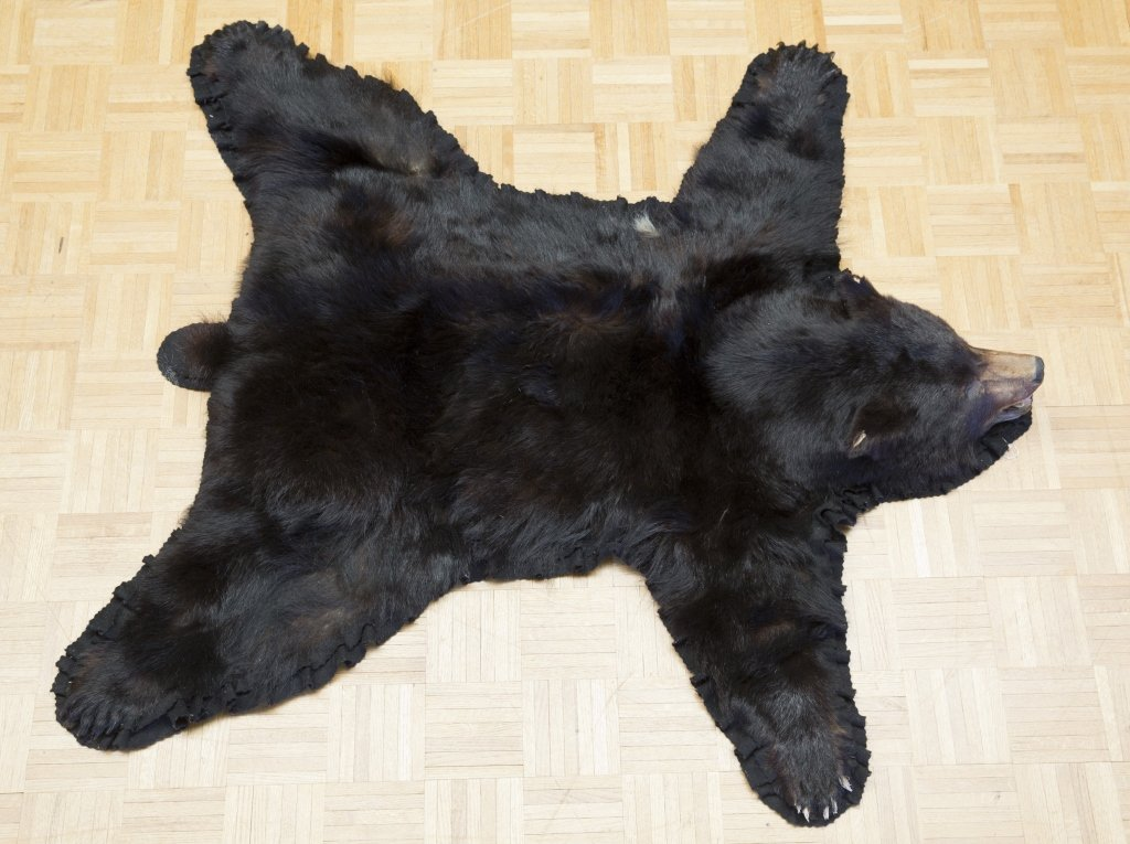 Black Bear Jonas Brothers Taxidermy Rug