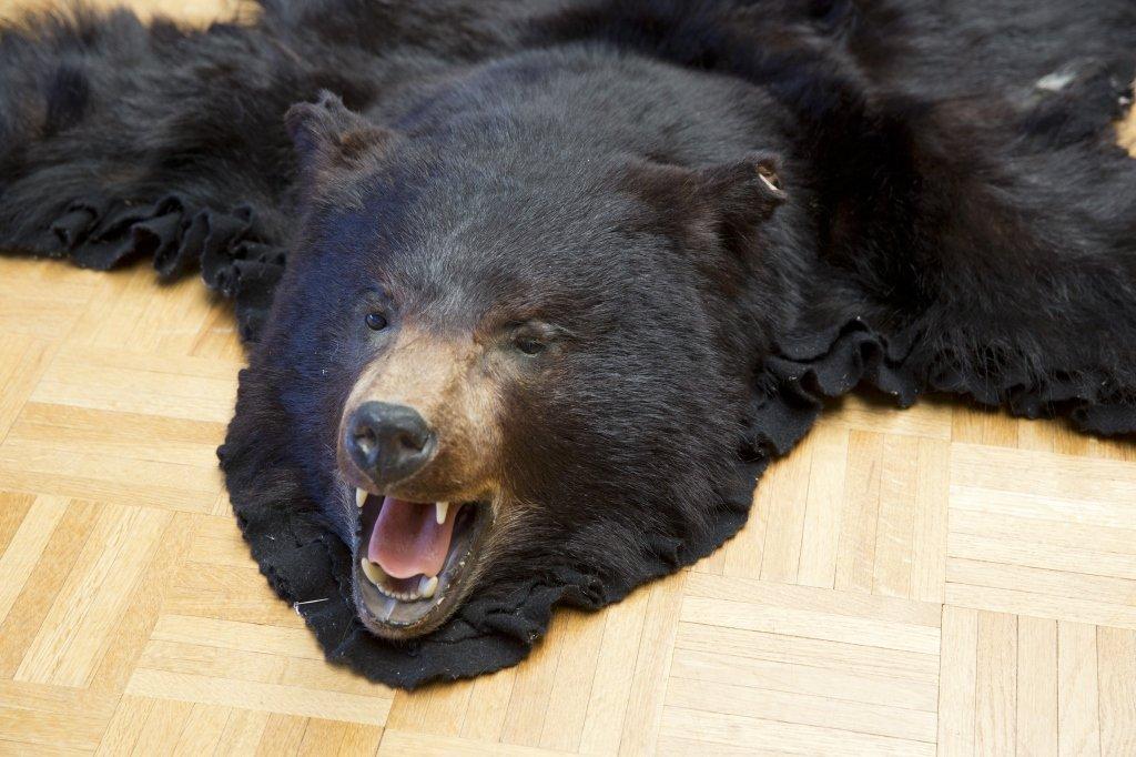 Black Bear Jonas Brothers Taxidermy Rug - 2