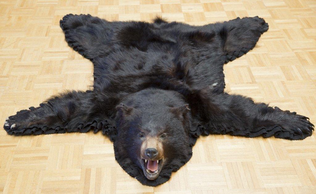Black Bear Jonas Brothers Taxidermy Rug - 3
