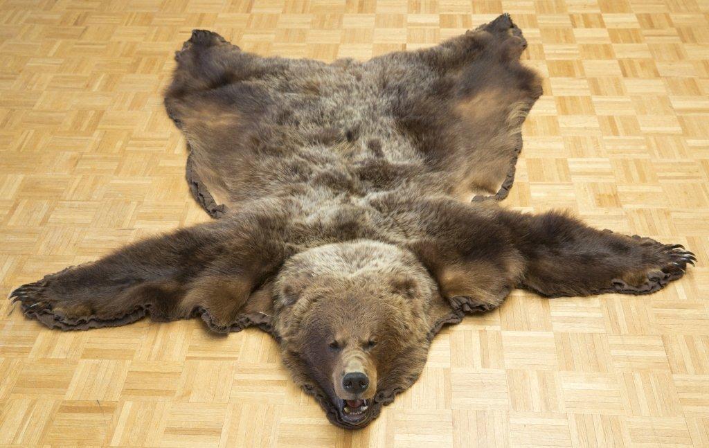 Taxidermy Brown Bear Rug