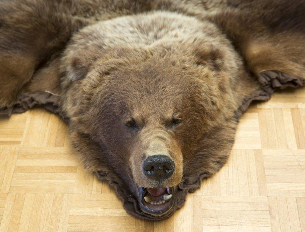 Taxidermy Brown Bear Rug - 2