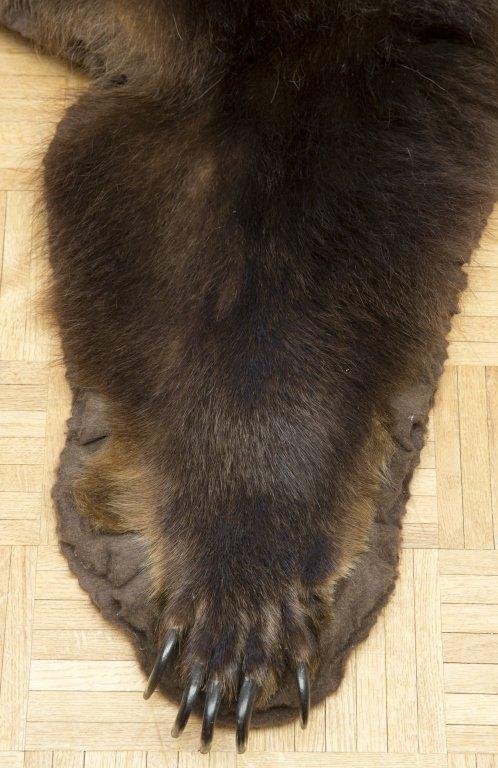 Taxidermy Brown Bear Rug - 3
