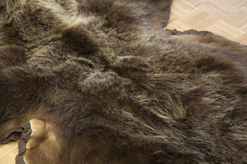 Taxidermy Brown Bear Rug - 5