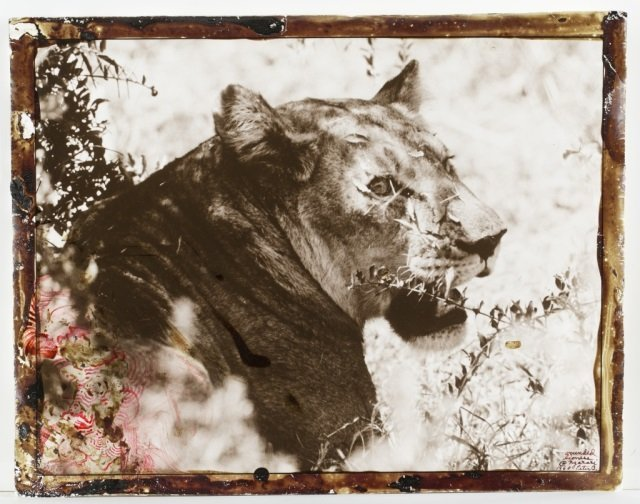 Peter Beard (US/New York, b. 1938).