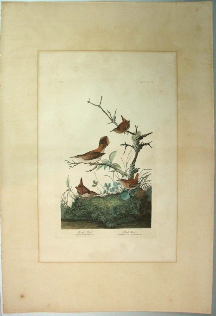 JOHN JAMES AUDUBON HAVELL WINTER WREN ROCK WREN 1826-38